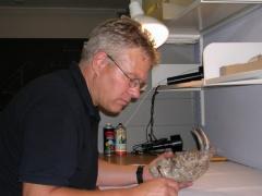 Der erste Säbelzahntiger Homotherium aus Südamerika
