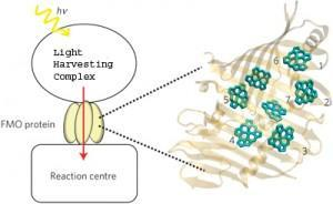 Quantenverschränkung in Pflanzen entdeckt