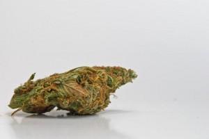 ab sofort: Cannabis auf Rezept in der BRD?