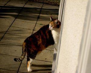 Katze vom Züchter oder aus dem Tierheim?