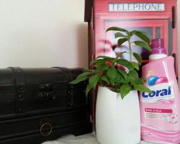 DIY Upcycling – Pflanzgefäße