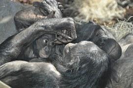 Summer of Love. Oder: Die Bonobos sind los