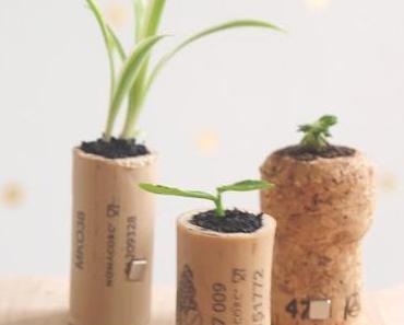 DIY - Minigarten