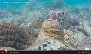 Ein bisschen Frieden, ein bisschen Freude im Great Barrier Reef.