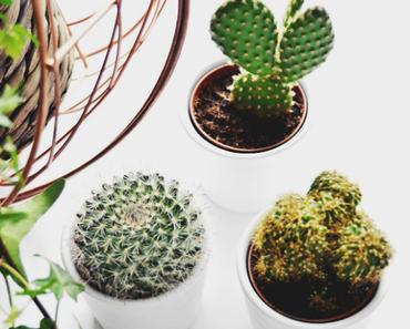 Interior: plants are friends