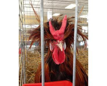Ich wollt ich währ ein Huhn oder ach du dickes Ei !?