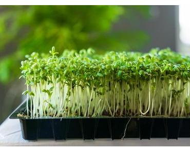 Kräuter-statt-Salz-Tag – der US-amerikanische More Herbs, Less Salt Day