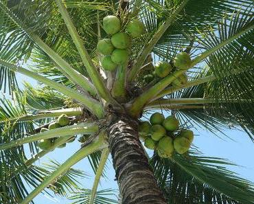 Kokosnusswasser und 7 Gründe es zu trinken
