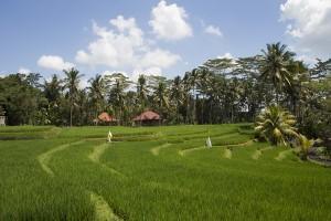 Ubud: Das gibt es in der Künstlerstadt zu entdecken