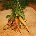 Kräuter und Gemüse vom Balkon