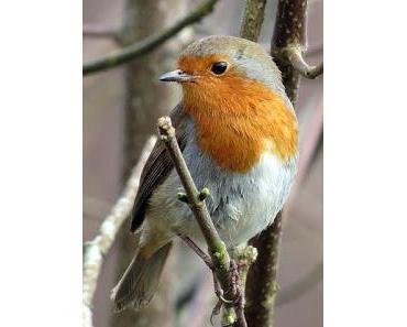 Sollte man Vögel im Winter füttern? Ja oder Nein?