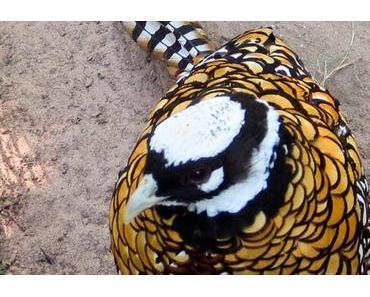 Tierpark Kunsterspring Neuruppin – wunderbar tierlieb