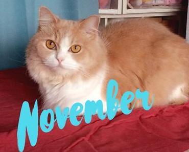 Schwatz Katz im November
