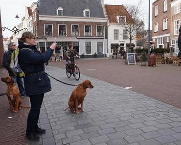 Persönlich getestet: Hunde-Jogging-Leine mit Bauchgurt