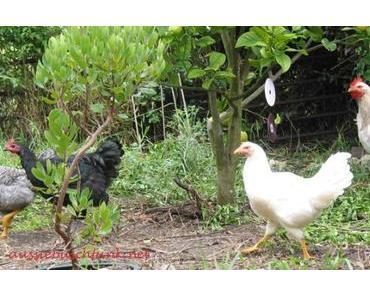 Busch-LIVE! I: Neuaustrieb und Hühnerdrama