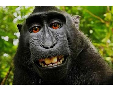 Jeder Affe kann SELFIE