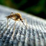 Zika-Virus – Achtung bei Kinderwunsch und Schwangerschaft