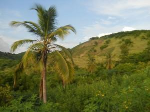 Batteriespeicher von Startup Qinous sichern saubere Energieversorgung in Haiti