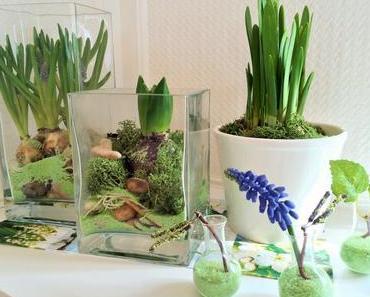 Der Vorfrühling auf der Fensterbank: Wir lassen Blumen vortreiben!