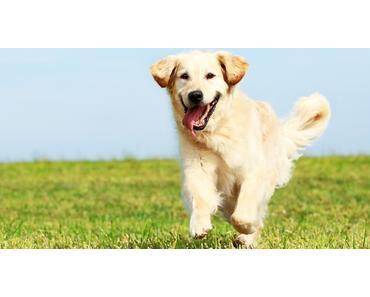 Gesundheitsprävention beim Hund – Teil 1 Ernährung