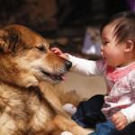 Hund und Baby – eine gute Kombi?