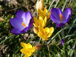 Spruch zum Wochenende: Frühling riechen