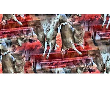 Frankreich ekelt sich vor seinen Schlachthöfen und empört sich über Tierquälerei