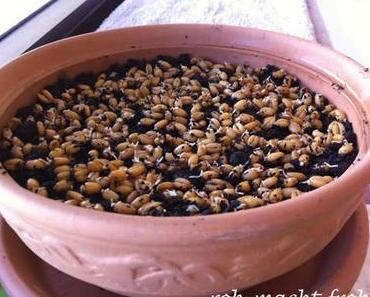 Weizengraaas