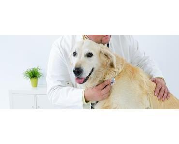 Gesundheitsprävention beim Hund – Teil 2 medizinische Versorgung