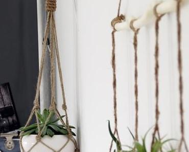 Genau das Richtige für mich | Luftpflanzen | Plants & Glass