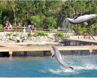 Tag der Delfine in den USA – der amerikanische National Dolphin Day