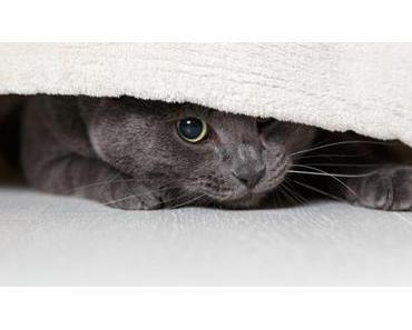 Ängstliche Katzen – 7 Tipps wie du einer scheuen Katze die Angst nehmen kannst