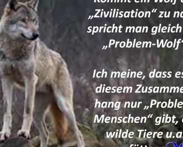 Kommt ein Wolf der Zivilisation zu nahe..