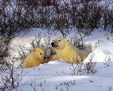 Raben- oder Bärenmutter?