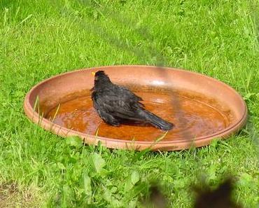 Wichtig im Sommer: Wasserstellen und Trinkstationen für Tiere aufstellen