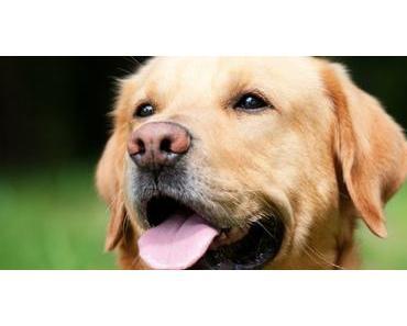 Gesundheitsprävention beim Hund – Teil 3 Vermeidung schädlicher Einflüsse