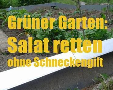 Grüner Garten: Salat retten ohne Schneckengift