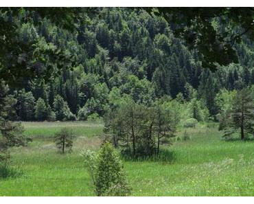 Fotos vom Faulenbachtal Füssen