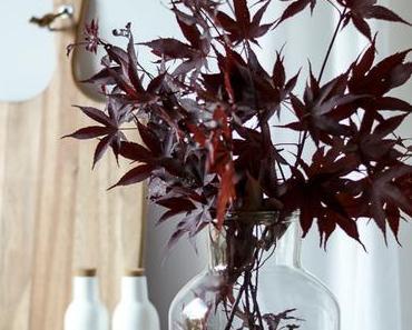 Flowers | Japanischer roter Ahorn in der Vase, nicht am Baum