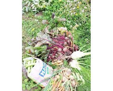Unsere erste riesen Ausbeute - Unser Gemüsegarten im Juli