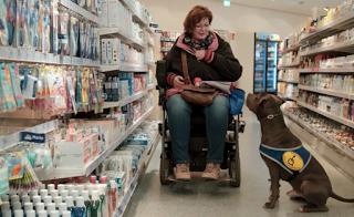 """Dokumentarfilm """"Freund oder Feind"""" über die Ambivalenz der Mensch-Hund-Beziehung"""