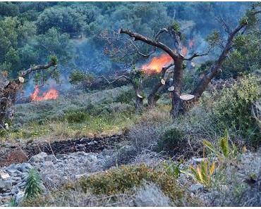Spanien in Flammen
