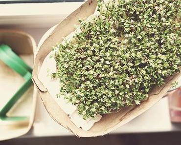 grünes Blitz-DIY: Kresse ziehen auf Küchenpapier