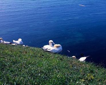 Helgoland: Impressionen II