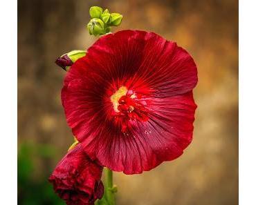 SEINSORIENTIERTE KÖRPERTHERAPIE (119): Liebe in Berührung