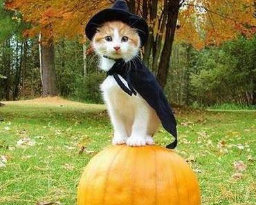 Allerheiligen - Halloween - Samhain