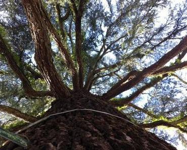 Baum-Liebe