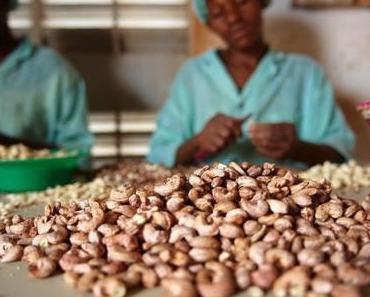 Fairtrade von Gebana: weltweit ab Hof – Wir VERLOSEN 1 Kilo getrocknete Mangos!