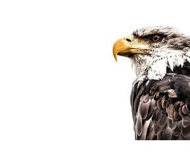 Tag des Vogels in den USA – der amerikanische National Bird Day