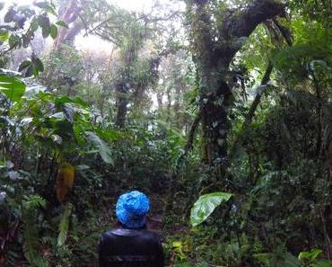 Nass bis auf die Knochen im Nebelwald von Santa Elena